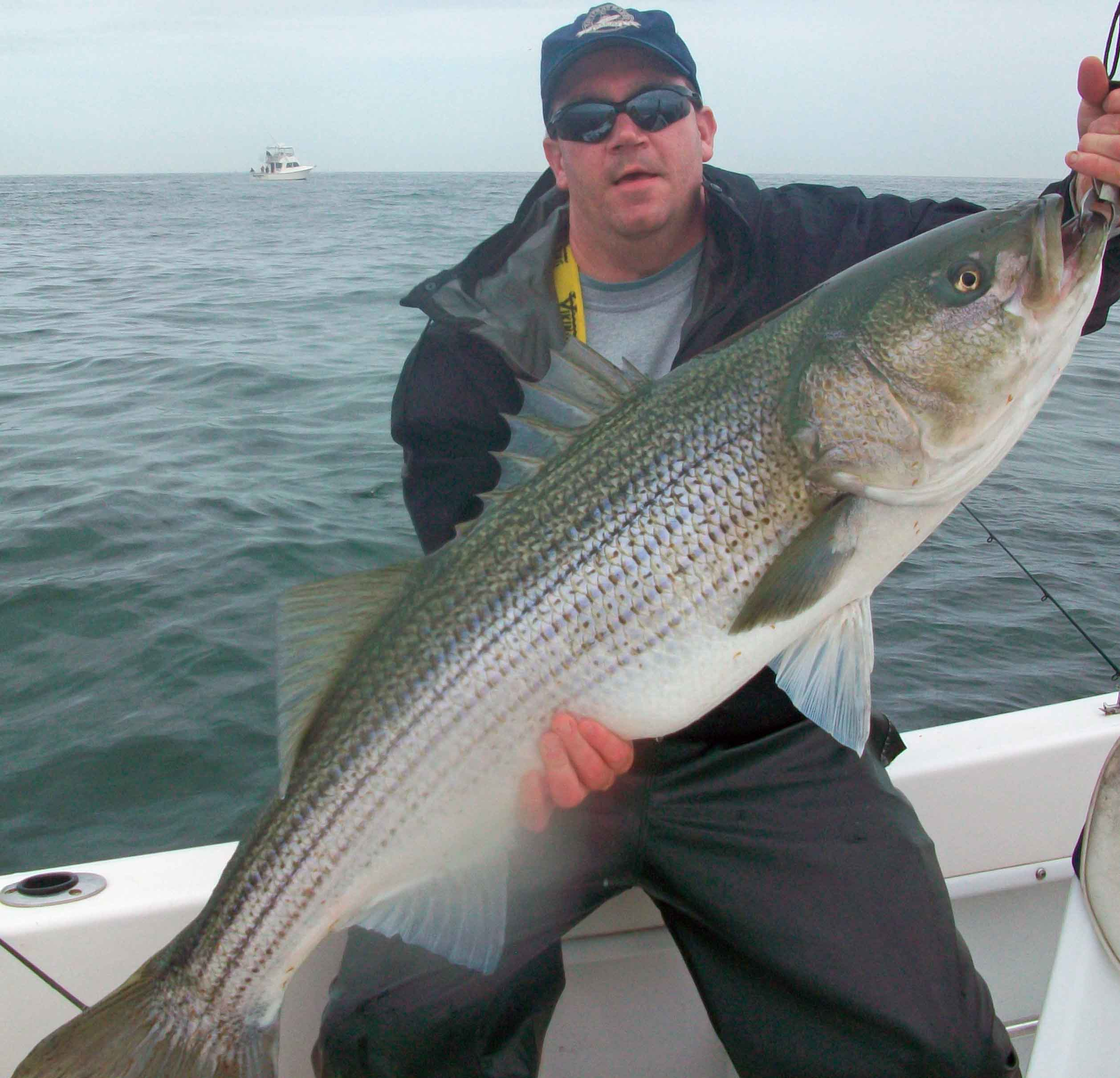 Striped bass in spanish for Brigantine fishing report